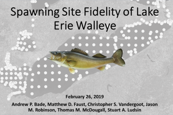 Spawning Site Fidelity of Lake Erie Walleye by Andrew Bade et al.