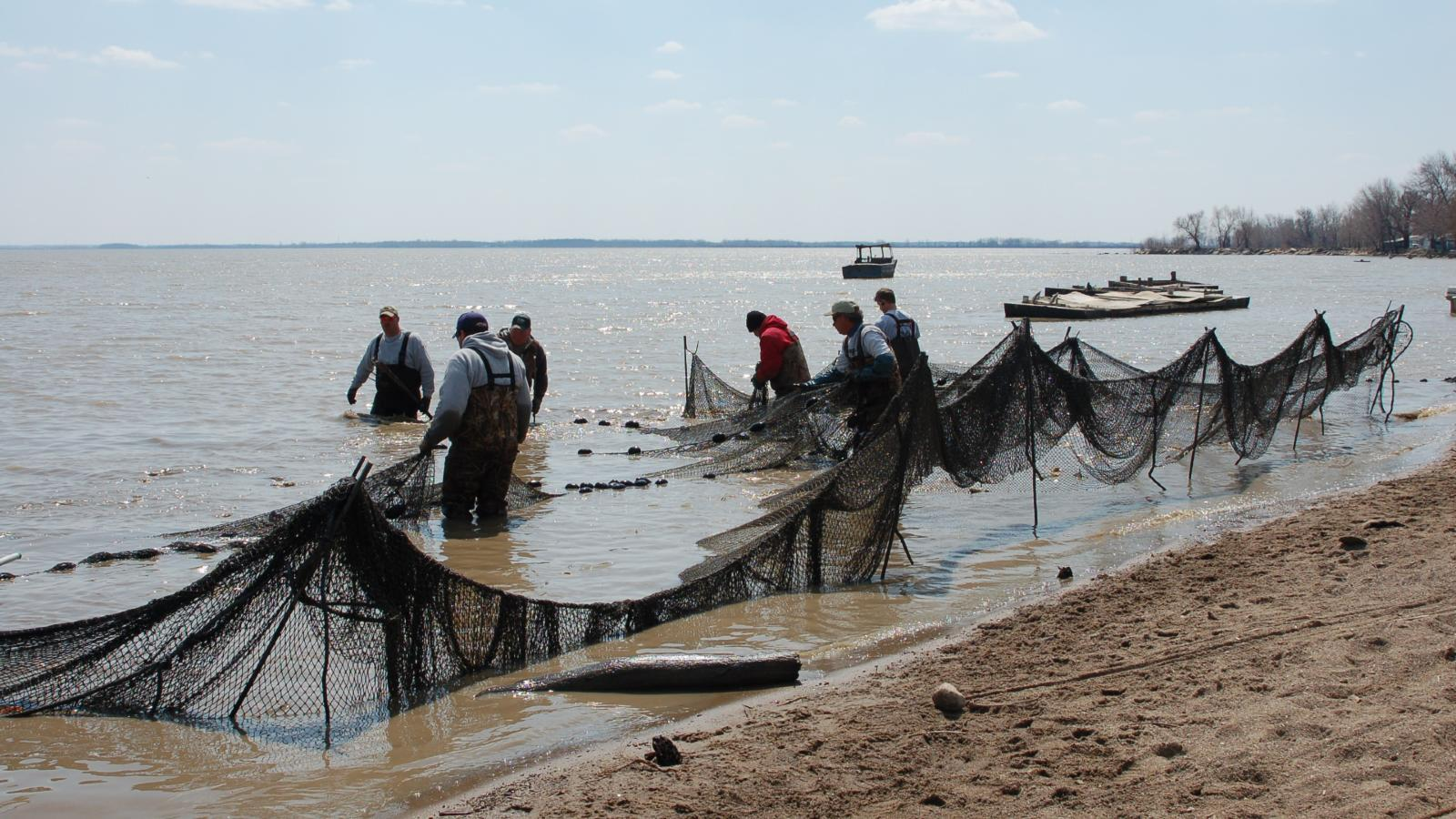 AEL and DOW staff fish collection in Sandusky